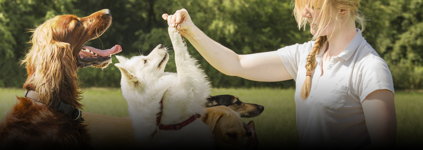 Pet trainer services in London