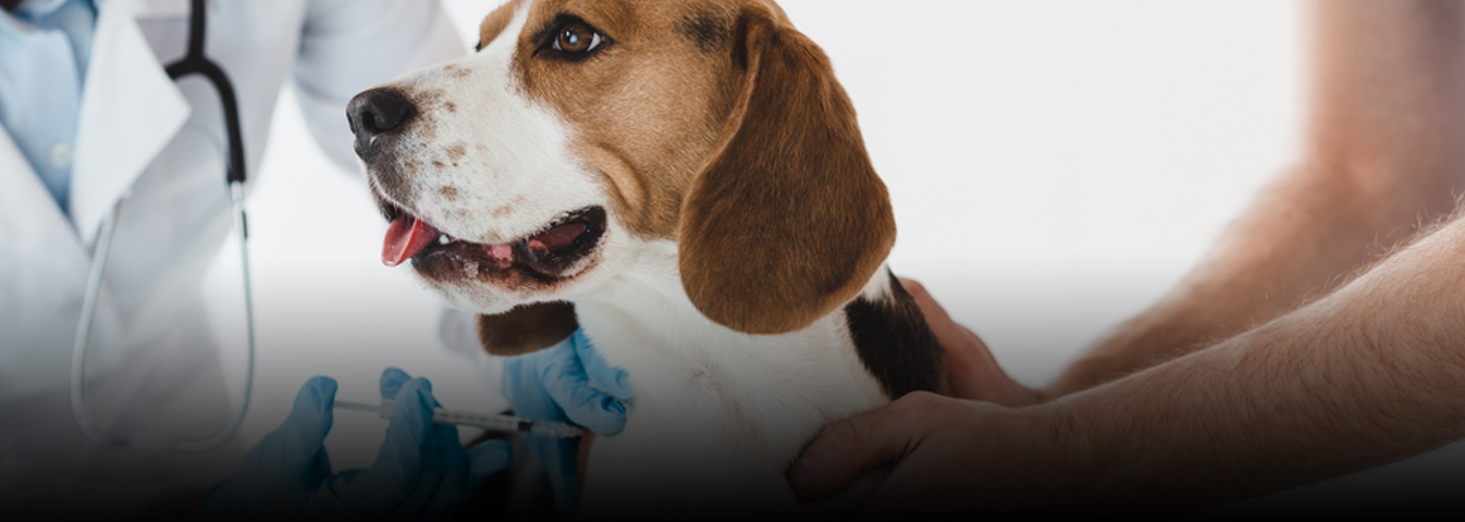 Pet Vaccination services in London